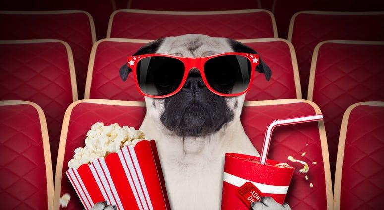 dog_watching_movie